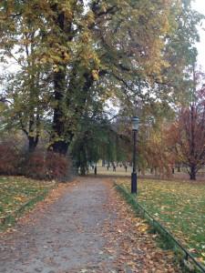 Morgon på väg till jobbet, Humlegården, Stockholm.